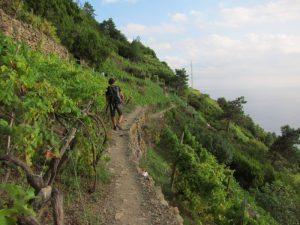 Cinqueterre Corniglia Manarola uzum baglari