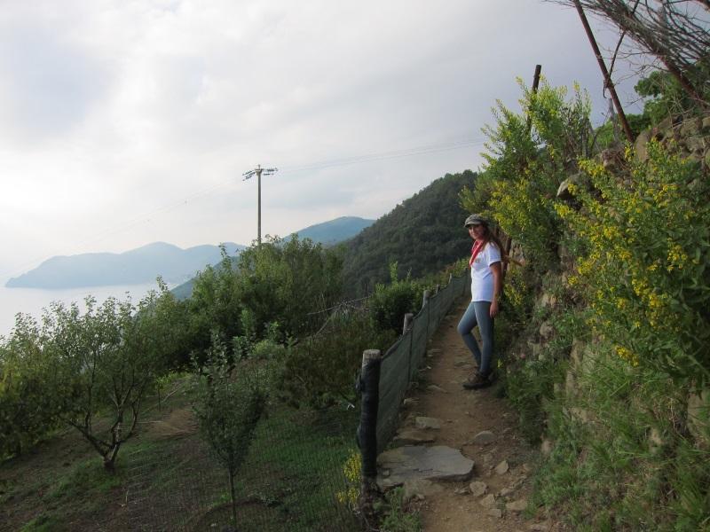 Corniglia Manarola uzum baglari