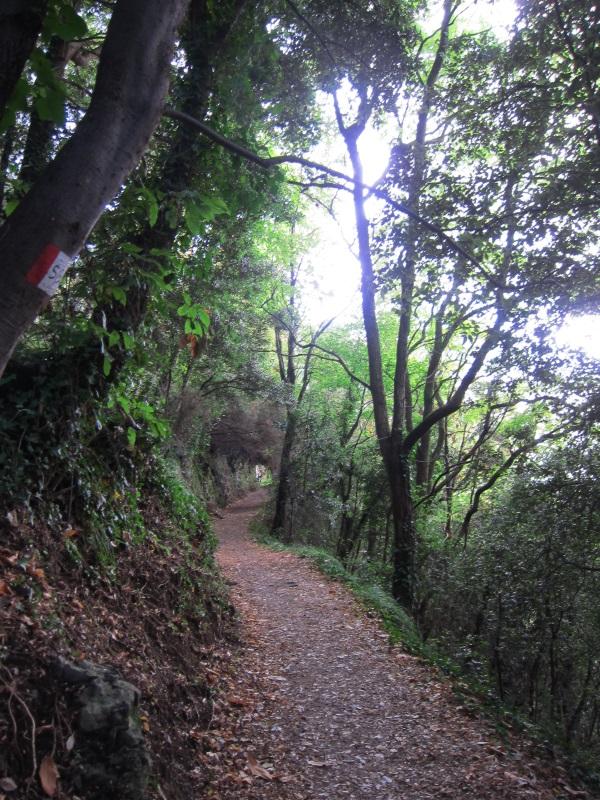 Corniglia Manarola yol ustunde orman