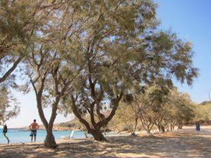 Paros Glyfa Beach