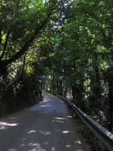 Manolates yolu ağaçlar, Samos